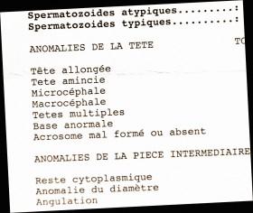 Extrait d'un spermocytogramme